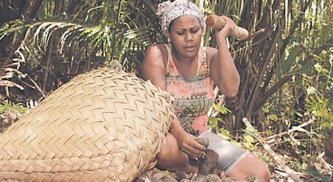Coco babaçu: empoderamento econômico sustentável