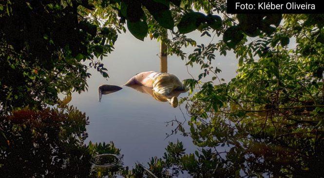 Corpo de um homem é encontrado nas águas do rio Longá em Esperantina