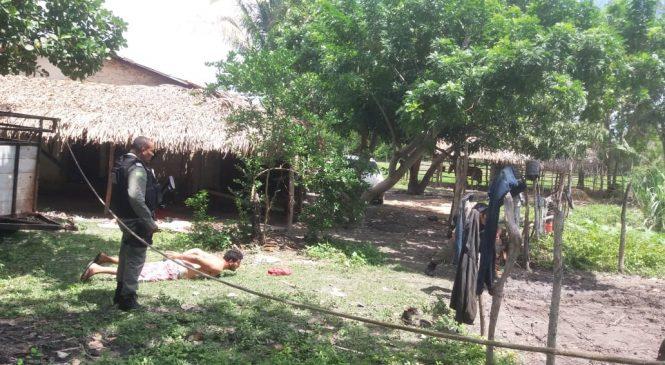 Quadrilha de Piripiri usa reboque para roubar gado em Barras. Um foi preso