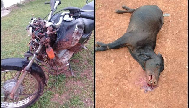 Acidente com animal na estrada deixa um gravemente ferido