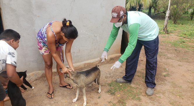 São João do Arraial inicia campanha de vacinação contra a Raiva em mais de 50 localidades